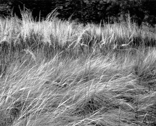 070_grass_Grass yosemite_valley_1944
